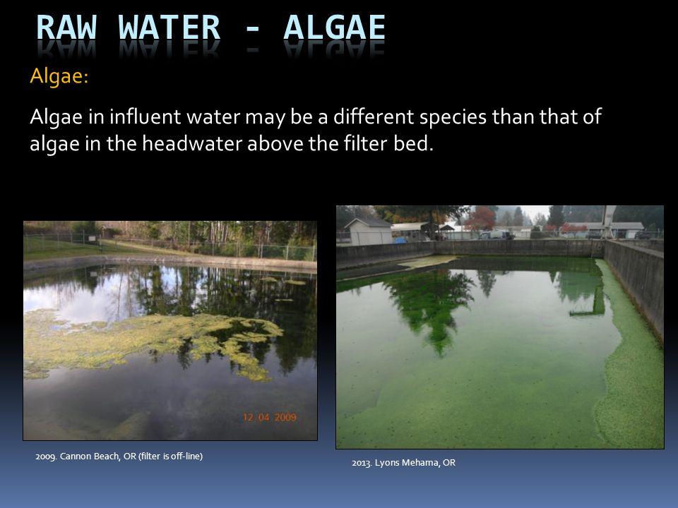 Raw Water - Algae Algae: