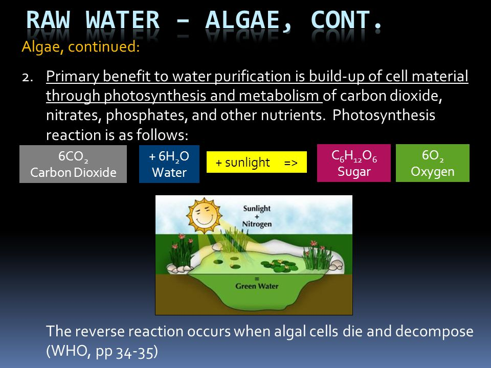 Raw Water – Algae, Cont. Algae, continued: