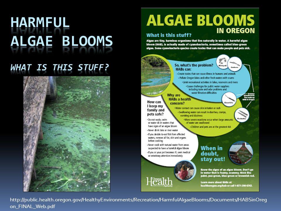 Harmful Algae Blooms What is this stuff