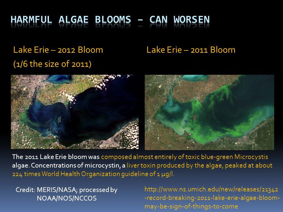 Credit: MERIS/NASA; processed by NOAA/NOS/NCCOS