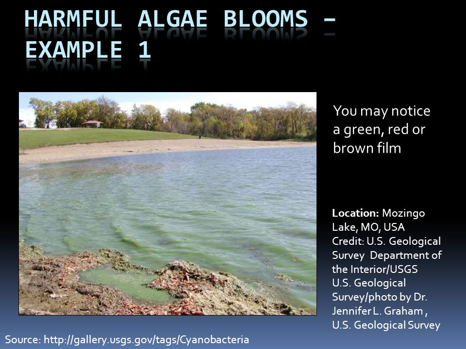 Harmful Algae Blooms – Example 1