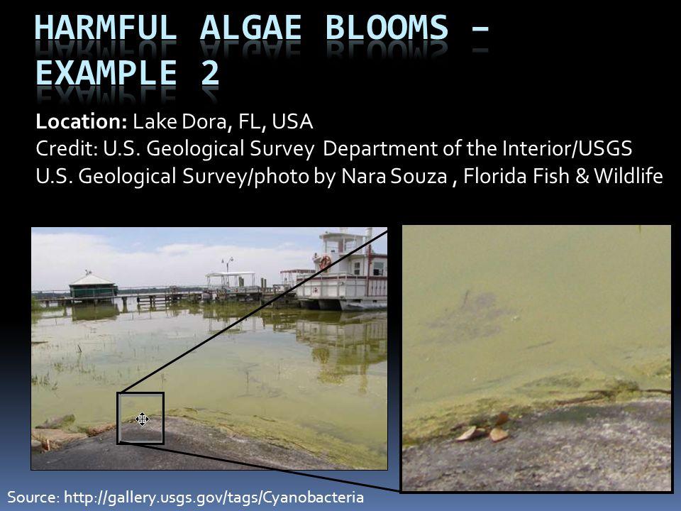Harmful Algae Blooms – Example 2 Location: Lake Dora, FL, USA