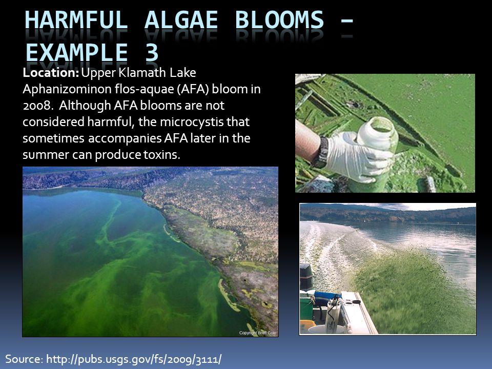 Harmful Algae Blooms – Example 3 Location: Upper Klamath Lake