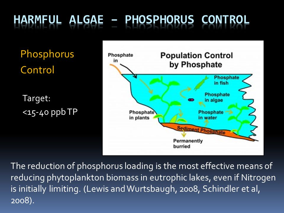 Harmful Algae – Phosphorus Control