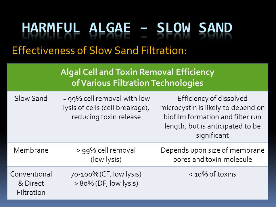 Harmful Algae – Slow Sand
