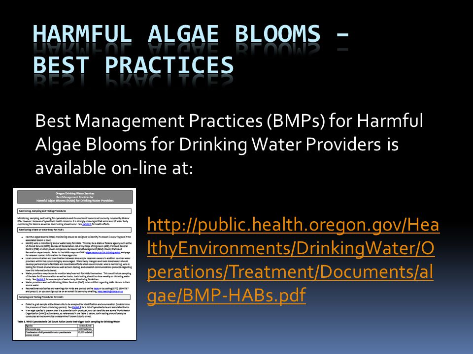 Harmful Algae Blooms – Best Practices