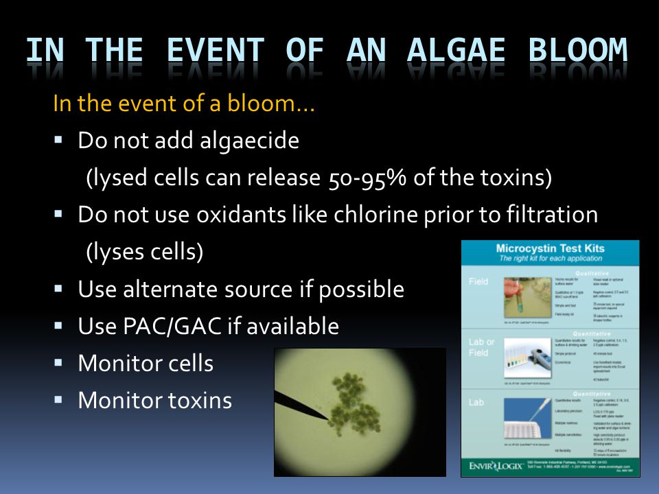 In the event of an algae bloom