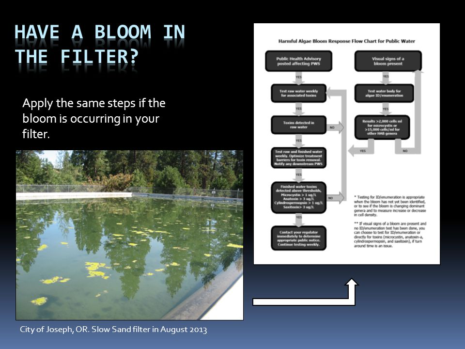 Have a Bloom in the Filter