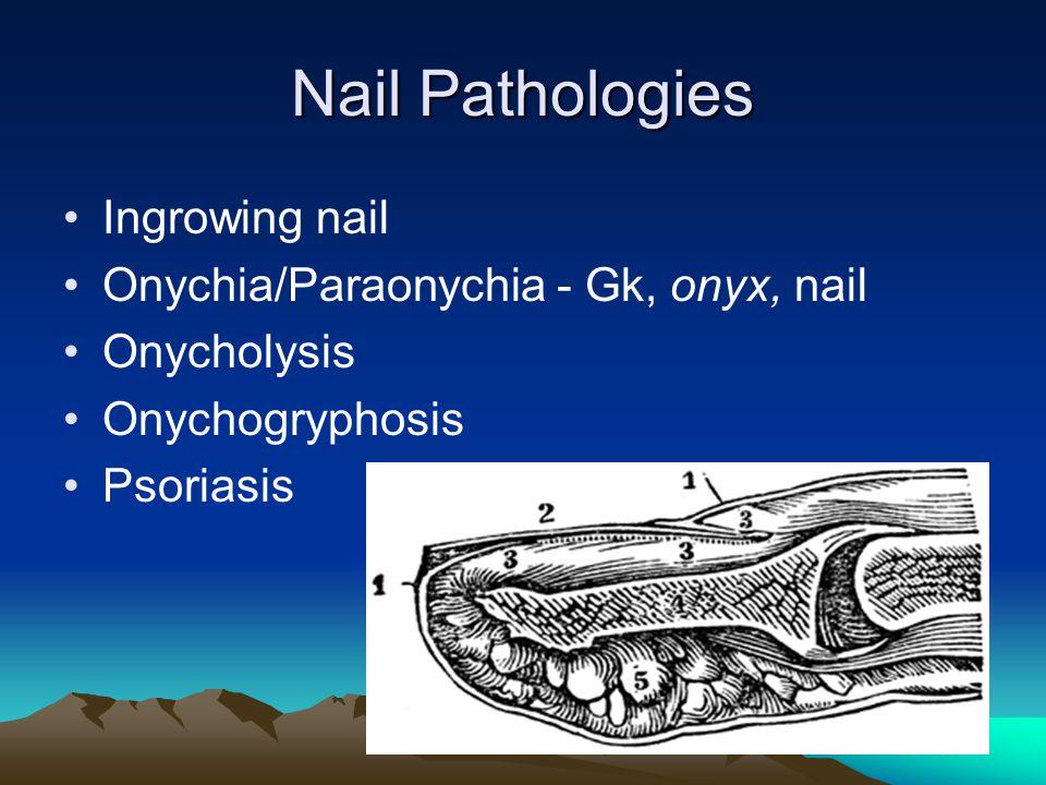 Nail Pathologies Ingrowing nail Onychia/Paraonychia - Gk, onyx, nail