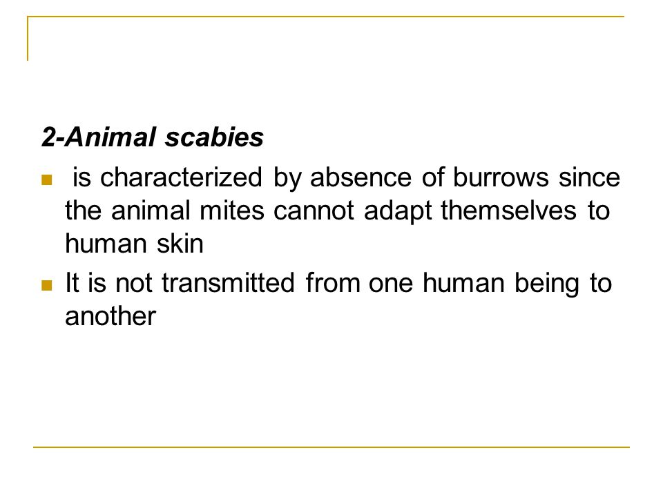 2-Animal scabies is characterized by absence of burrows since the animal mites cannot adapt themselves to human skin.