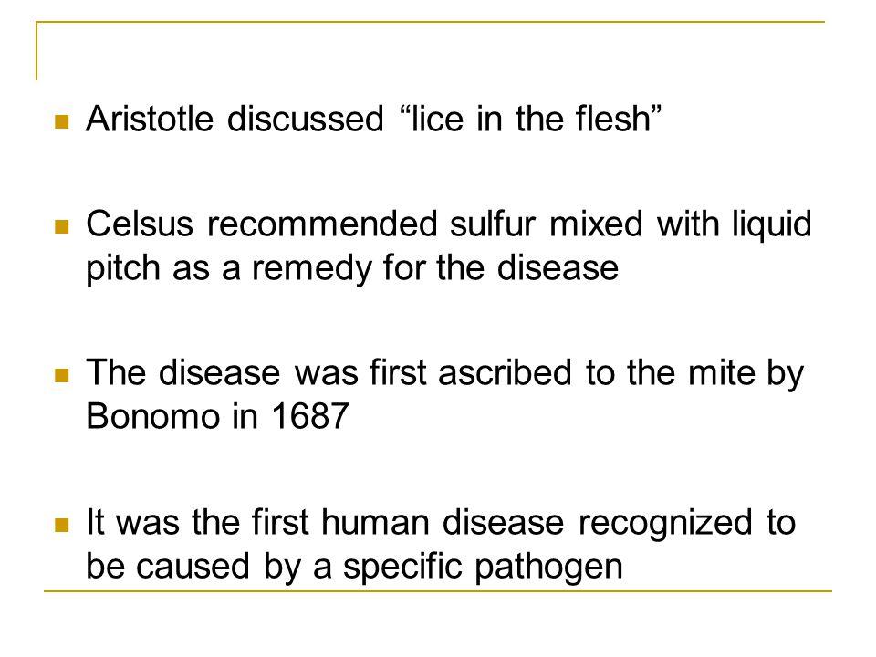 Aristotle discussed lice in the flesh