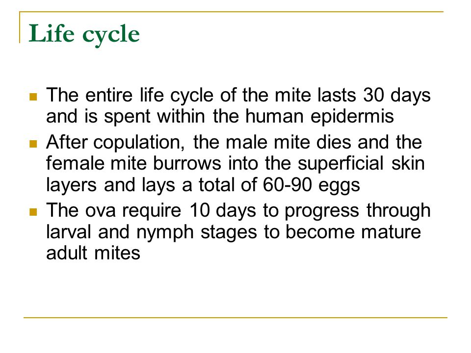 Life cycle The entire life cycle of the mite lasts 30 days and is spent within the human epidermis.