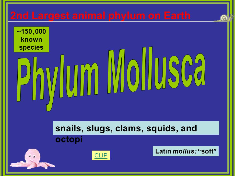 Phylum Mollusca 2nd Largest animal phylum on Earth