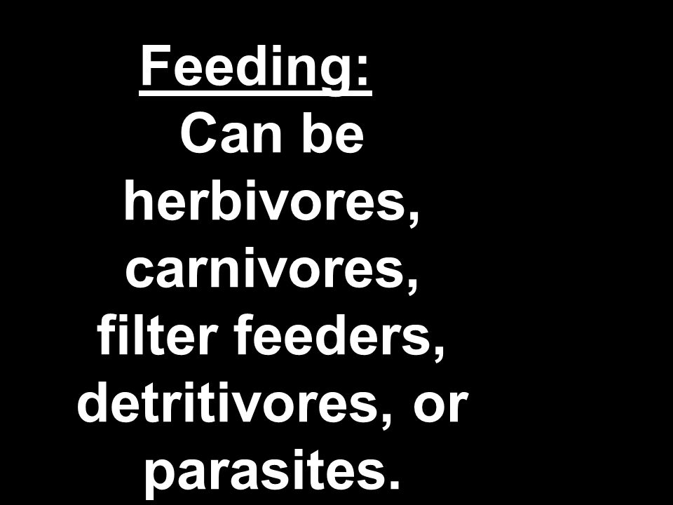 Feeding: Can be herbivores, carnivores, filter feeders, detritivores, or parasites.