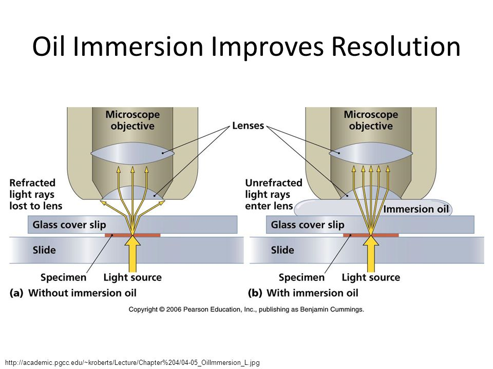 Oil Immersion Improves Resolution