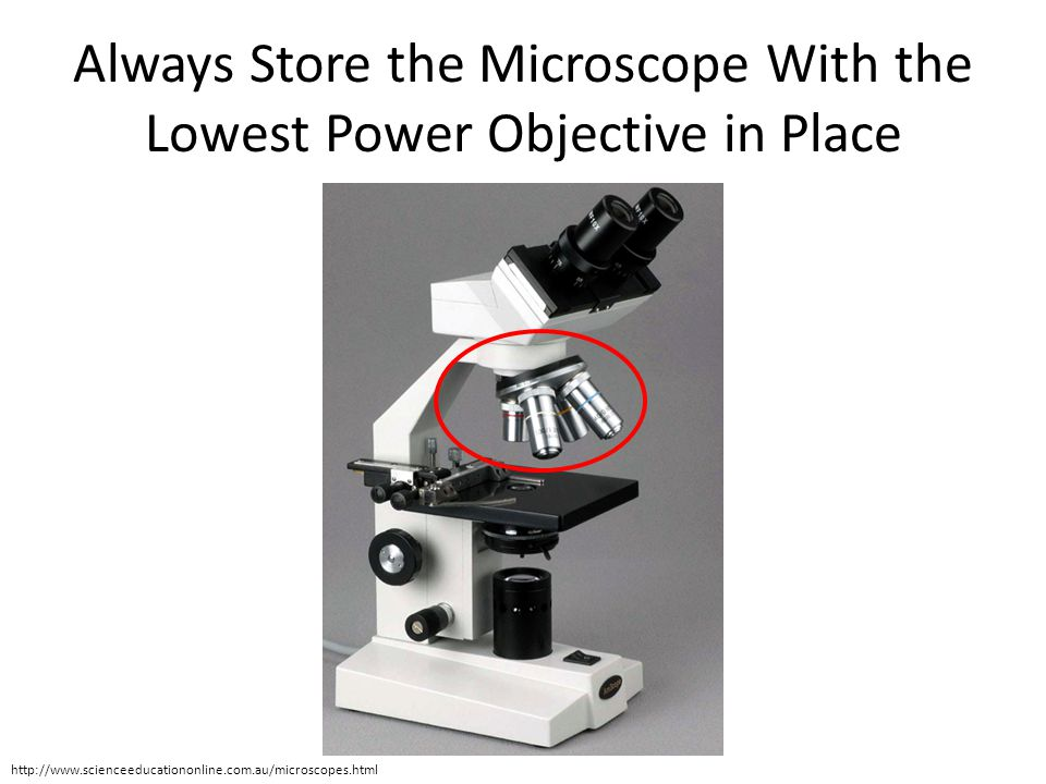 Always Store the Microscope With the Lowest Power Objective in Place
