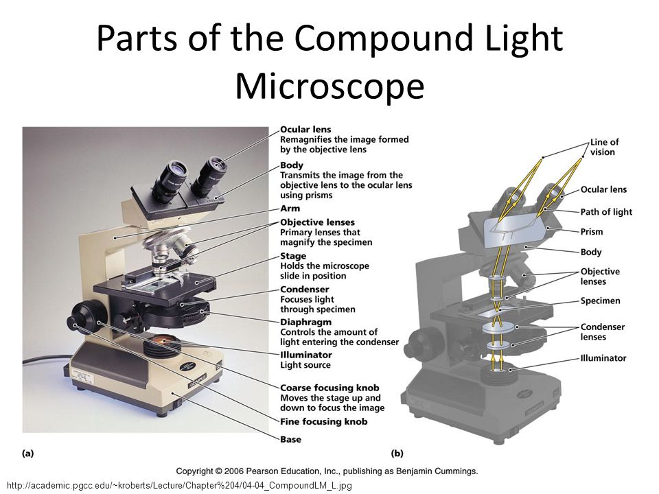microscopy use and function Phase contrast microscopy  conjugate properties to enhance image contrast by modifying the microscope aperture function to introduce spatial filtration of.