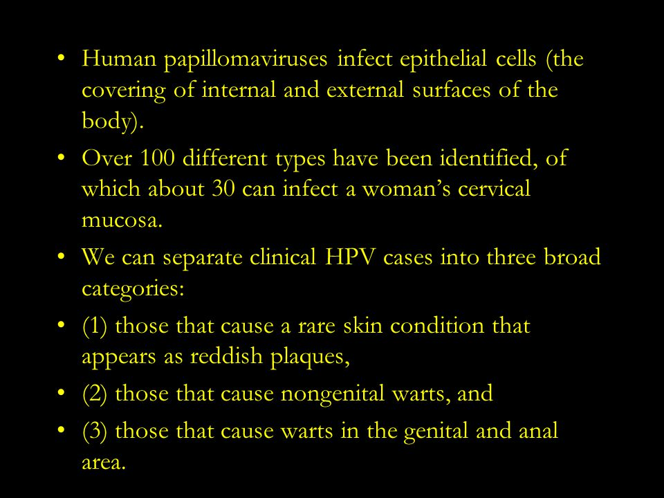 Human papillomaviruses infect epithelial cells (the covering of internal and external surfaces of the body).
