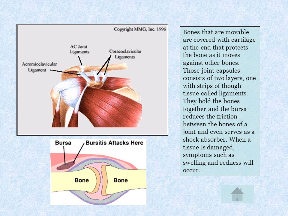 Bones that are movable are covered with cartilage at the end that protects the bone as it moves against other bones.
