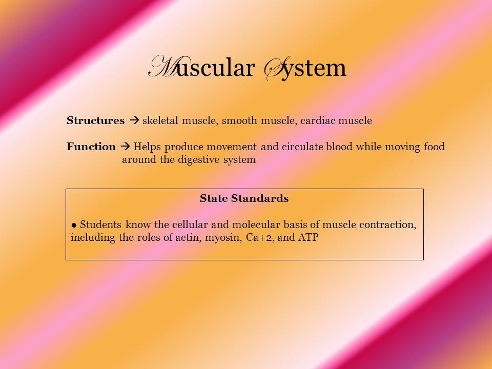 Muscular System Structures  skeletal muscle, smooth muscle, cardiac muscle. Function  Helps produce movement and circulate blood while moving food.
