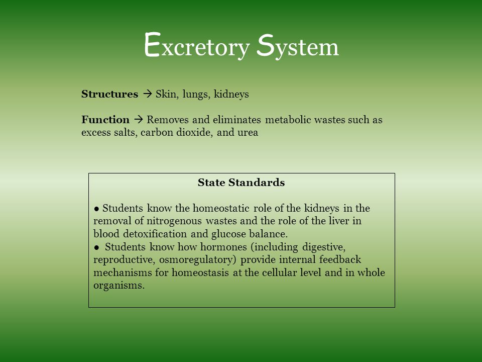 Excretory System Structures  Skin, lungs, kidneys