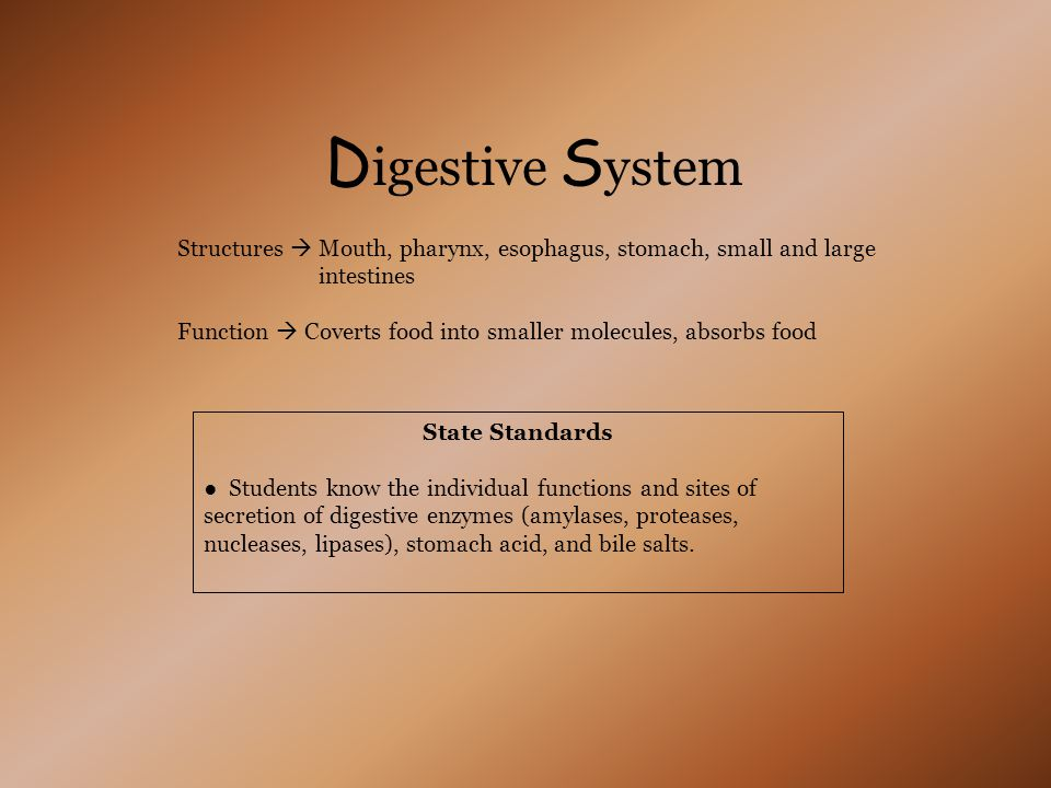 Digestive System Structures  Mouth, pharynx, esophagus, stomach, small and large. intestines.
