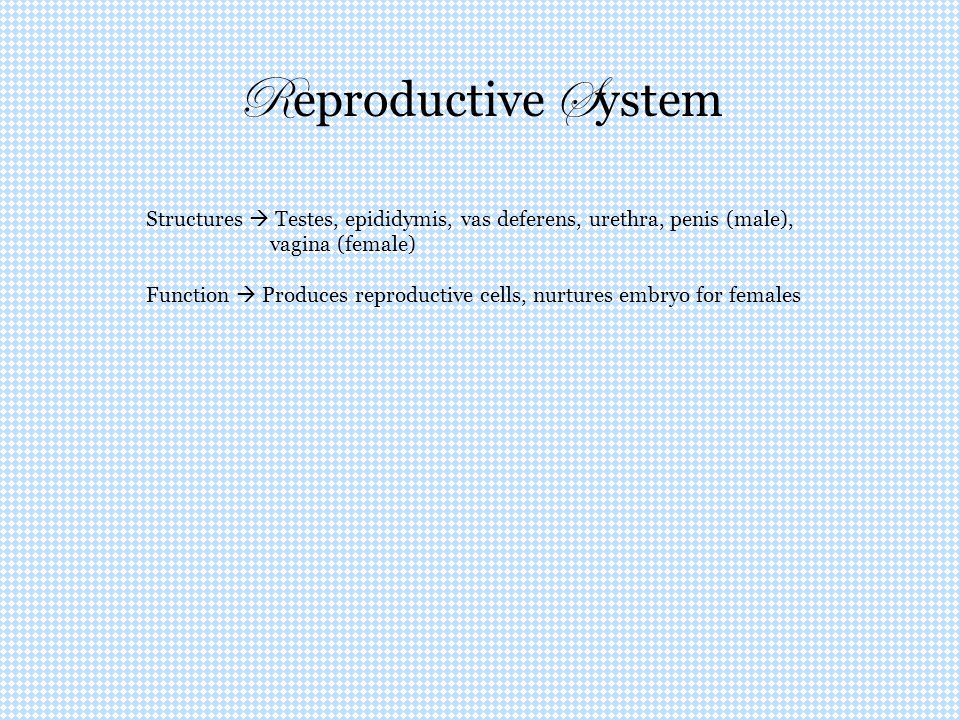 Reproductive System Structures  Testes, epididymis, vas deferens, urethra, penis (male), vagina (female)