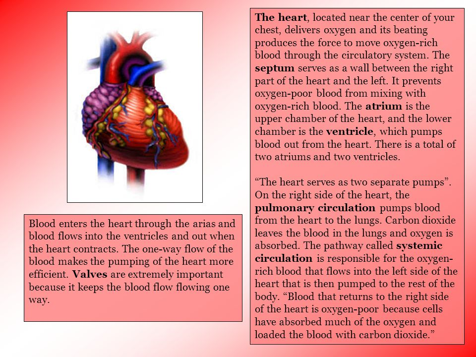 The heart, located near the center of your chest, delivers oxygen and its beating produces the force to move oxygen-rich blood through the circulatory system. The septum serves as a wall between the right part of the heart and the left. It prevents oxygen-poor blood from mixing with oxygen-rich blood. The atrium is the upper chamber of the heart, and the lower chamber is the ventricle, which pumps blood out from the heart. There is a total of two atriums and two ventricles.