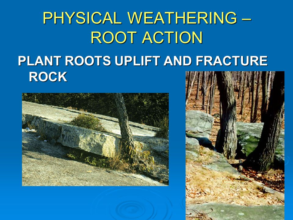 PHYSICAL WEATHERING – ROOT ACTION