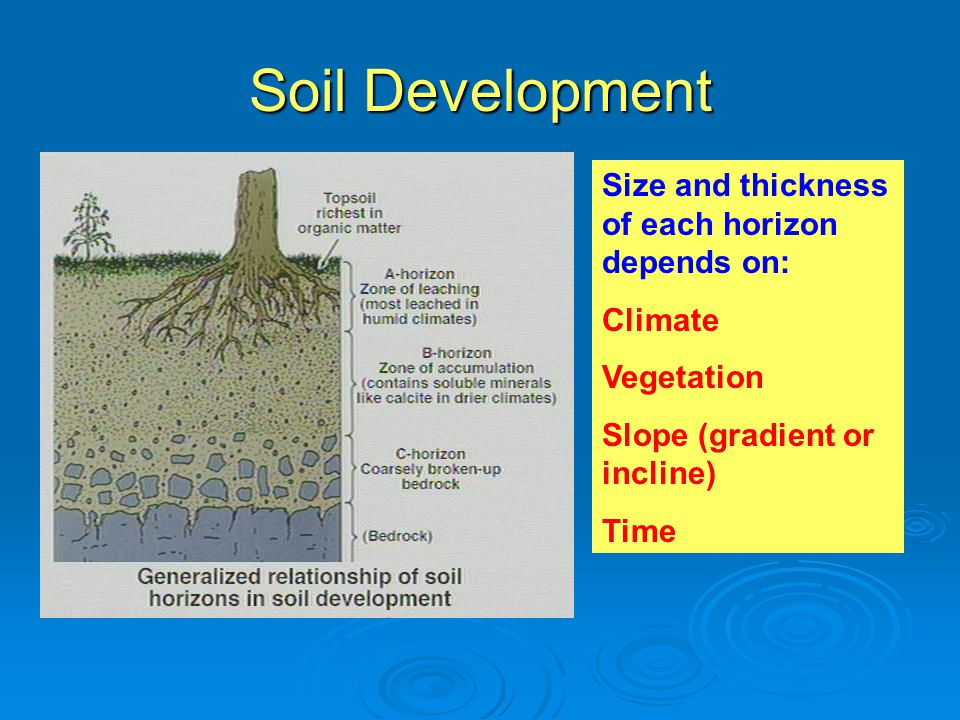 Soil Development Size and thickness of each horizon depends on: