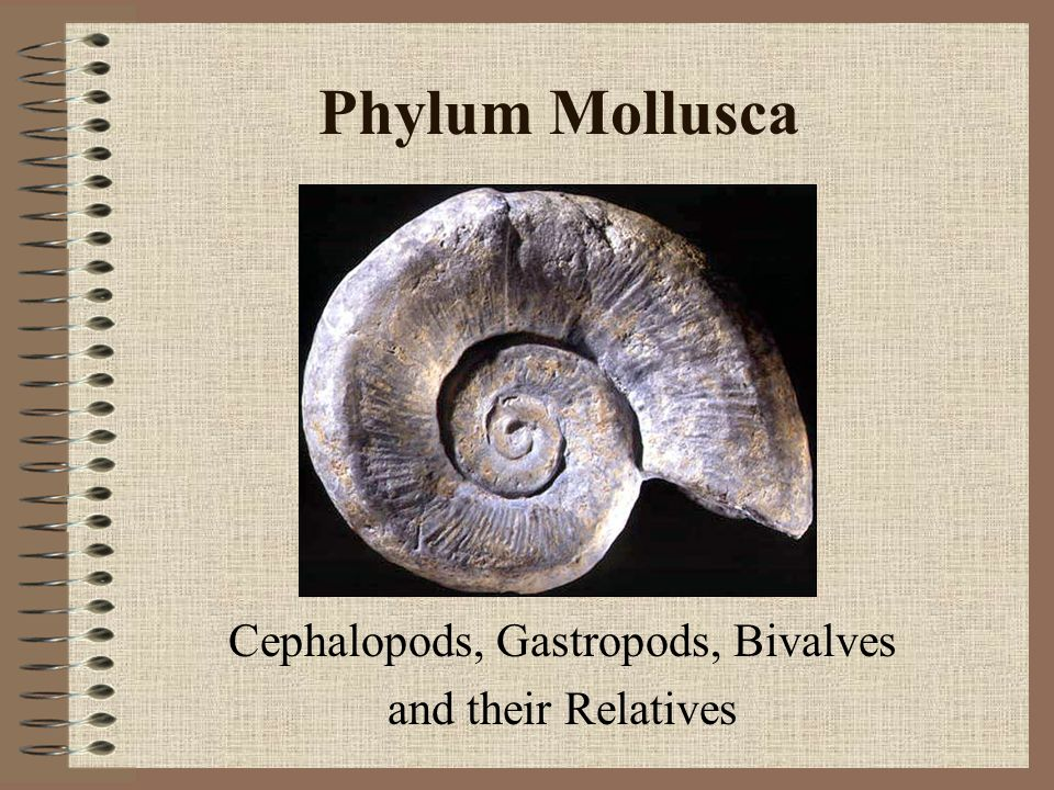 Cephalopods, Gastropods, Bivalves and their Relatives