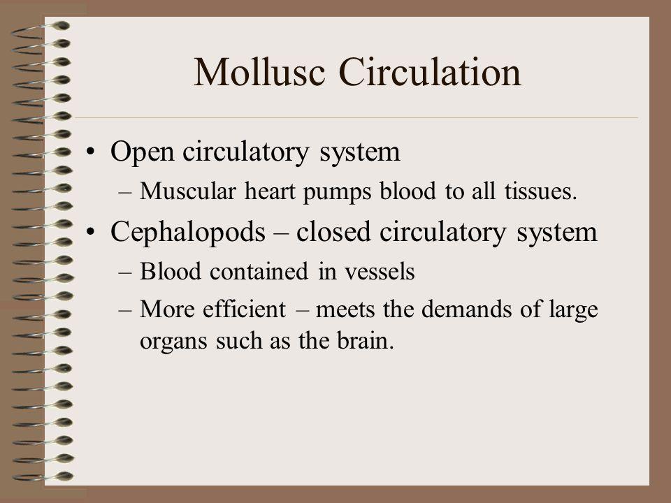 Mollusc Circulation Open circulatory system