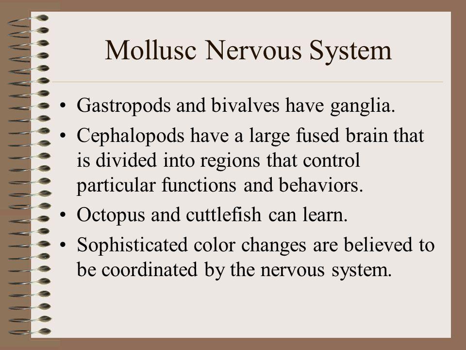 Mollusc Nervous System