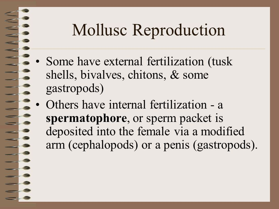 Mollusc Reproduction Some have external fertilization (tusk shells, bivalves, chitons, & some gastropods)