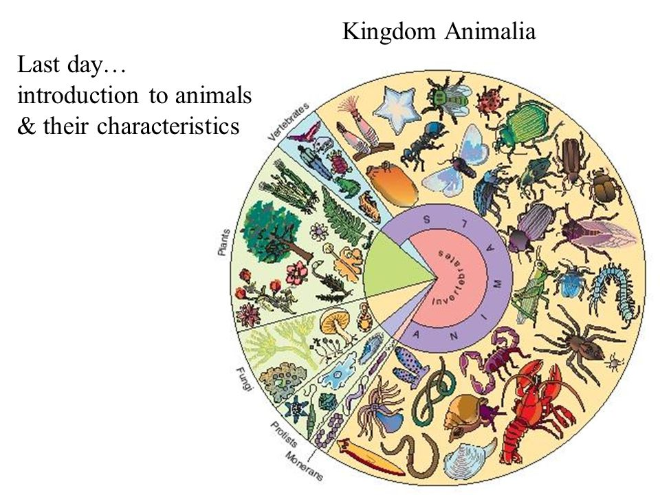Kingdom Animalia Last day… introduction to animals & their characteristics