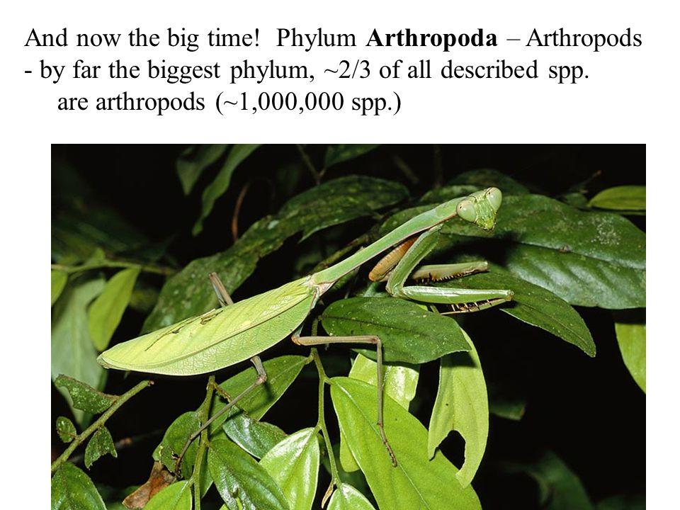 And now the big time! Phylum Arthropoda – Arthropods