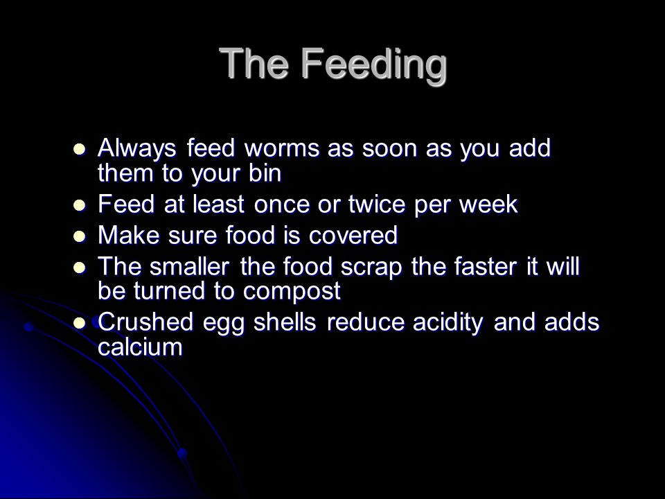 The Feeding Always feed worms as soon as you add them to your bin