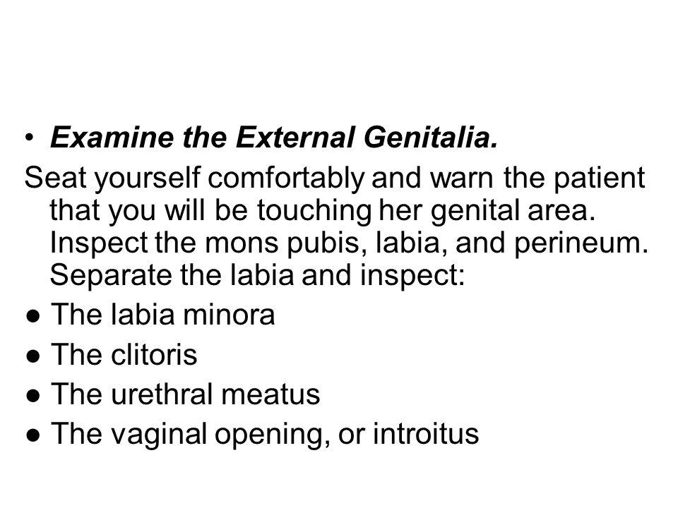 Examine the External Genitalia.