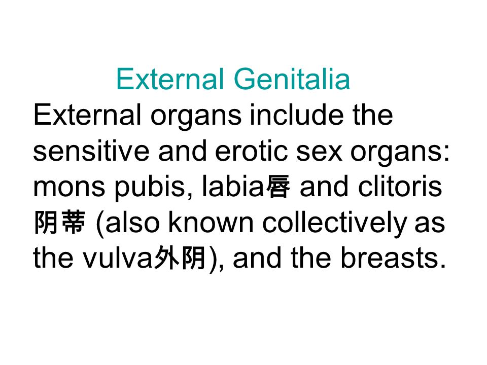External Genitalia External organs include the sensitive and erotic sex organs: mons pubis, labia唇 and clitoris阴蒂 (also known collectively as the vulva外阴), and the breasts.