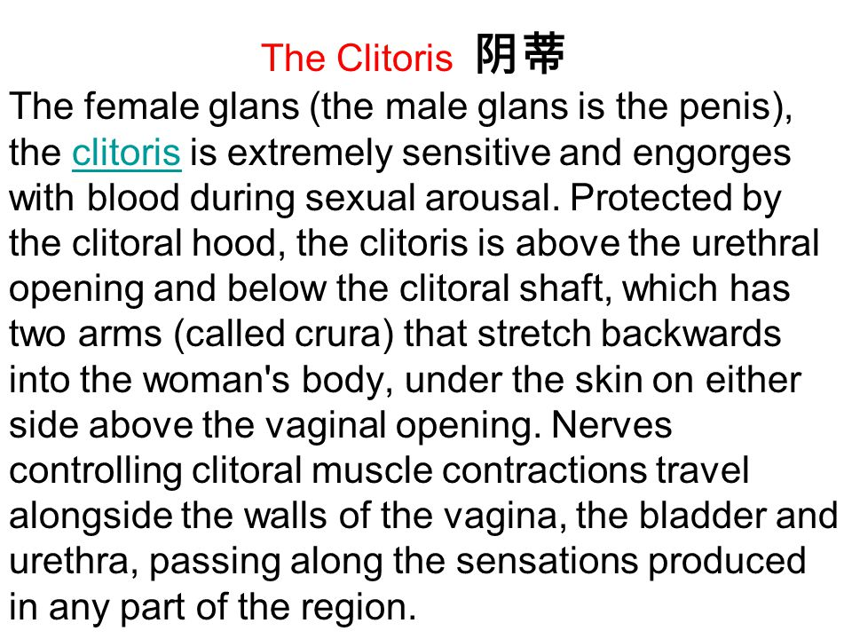 The Clitoris 阴蒂 The female glans (the male glans is the penis), the clitoris is extremely sensitive and engorges with blood during sexual arousal.