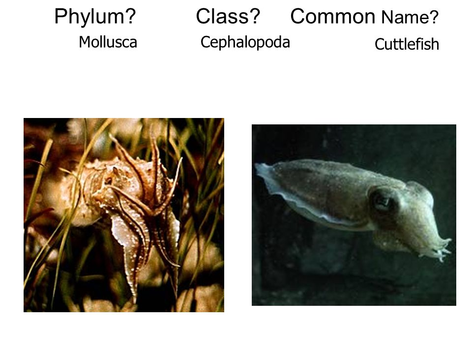 Phylum Class Common Name