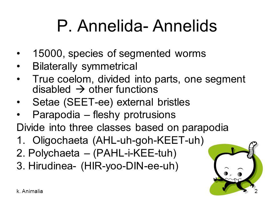 P. Annelida- Annelids 15000, species of segmented worms