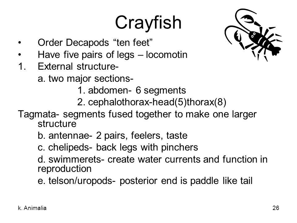 Crayfish Order Decapods ten feet Have five pairs of legs – locomotin