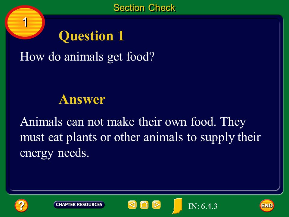 Question 1 Answer 1 How do animals get food