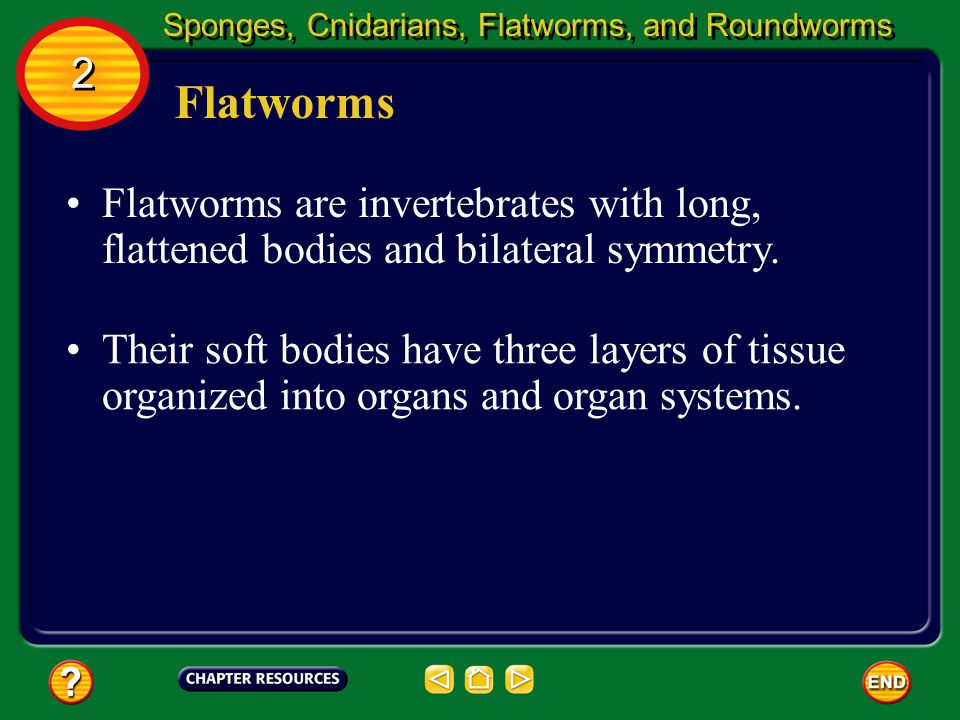 Sponges, Cnidarians, Flatworms, and Roundworms