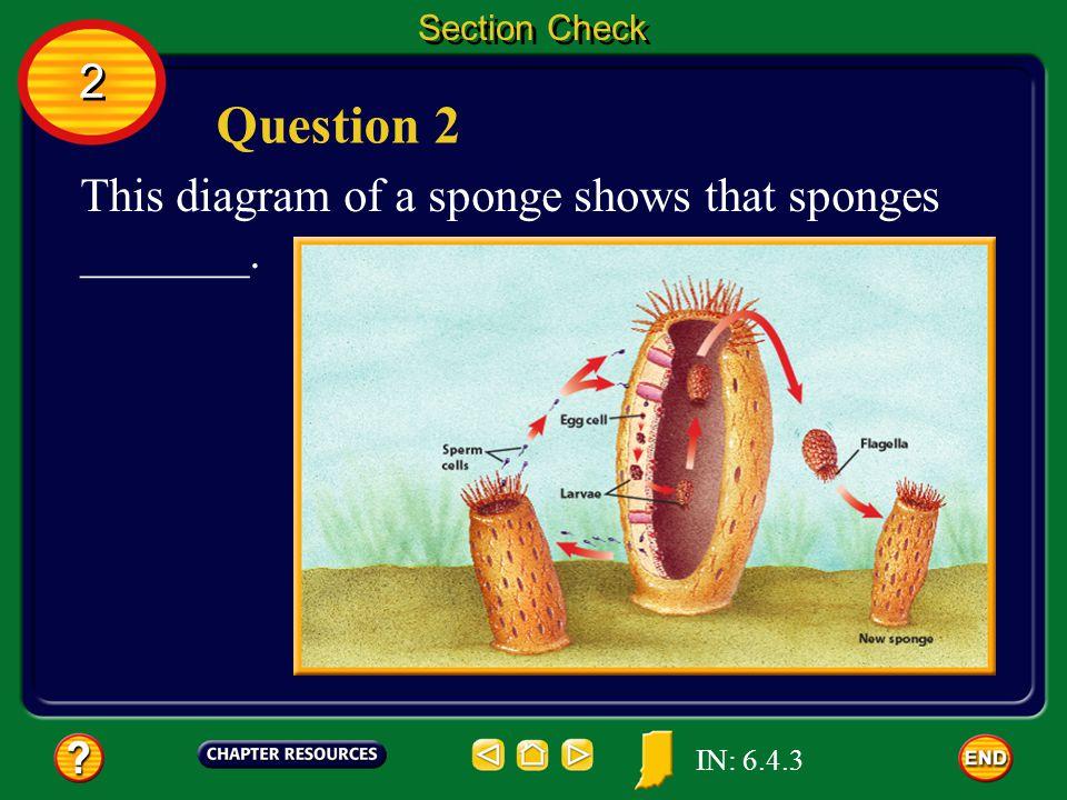 Question 2 2 This diagram of a sponge shows that sponges _______.