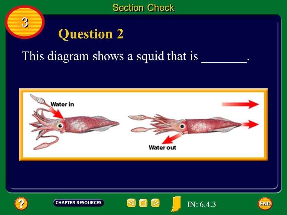 Question 2 3 This diagram shows a squid that is _______. Section Check