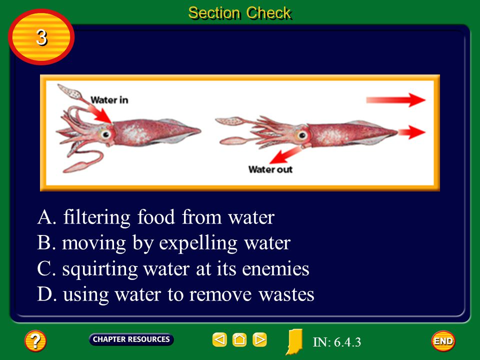 A. filtering food from water B. moving by expelling water