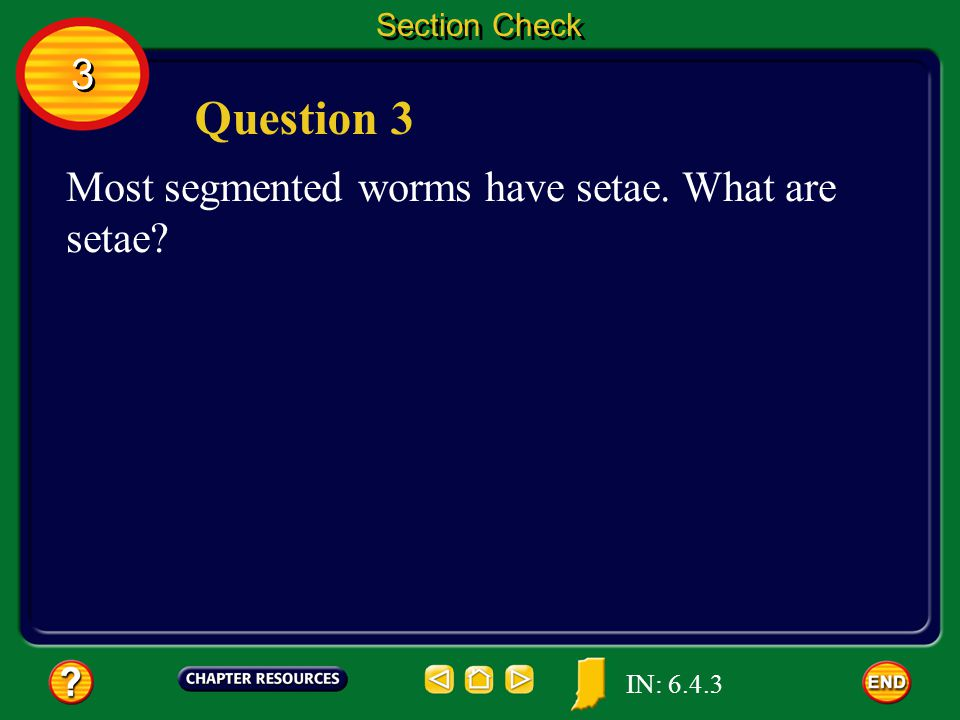 Question 3 3 Most segmented worms have setae. What are setae