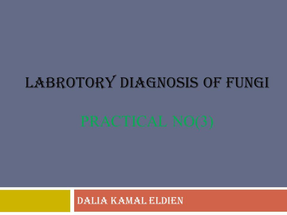 LABROTORY DIAGNOSIS OF FUNGI PRACTICAL no(3)
